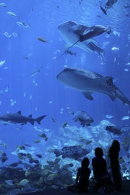 水槽を眺めながらのお泊まりツアーも?「水族館」の意外な楽しみ方
