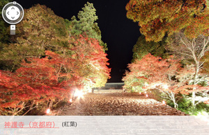 Google、ストリートビューで楽しめる紅葉スポット102ヶ所を紹介 新宿御苑、京都のトロッコ列車も