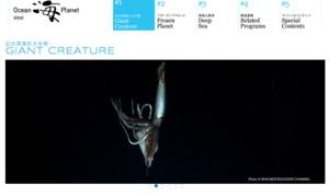 深海で泳ぐ「ダイオウイカ」、世界で初めて撮影に成功 1/13にNHKスペシャルで放送