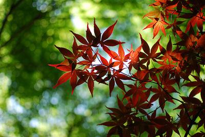 名所から穴場まで!京都在住ライターが選ぶ、オススメ紅葉スポット6ヶ所