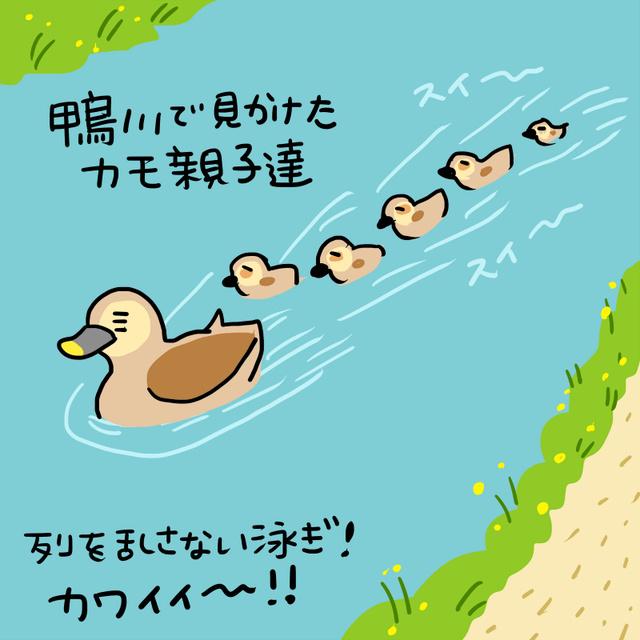 今週の「ひとこま」振り返り(6/8~6/12) 風流な京都の鴨川