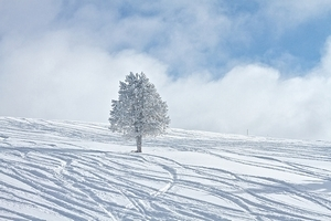 """「雪」を上手に撮影するには? ポイントは""""露出補正""""と""""フラッシュ"""""""