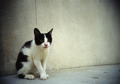 猫背は肩こりの原因に?オフィスでもできる「姿勢の直し方」