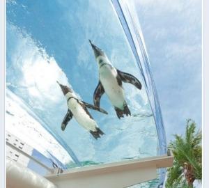ペンギンが池袋の空を泳ぐ――サンシャイン水族館のドーナツ型水槽に7/20から期間限定で