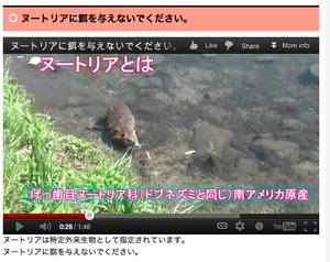 「ヌートリアに餌を与えないでください」 京都・鴨川に生息する特定外来生物に注意